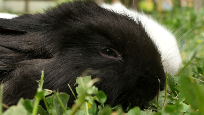 bunny rabbit sniffing around - photo #32