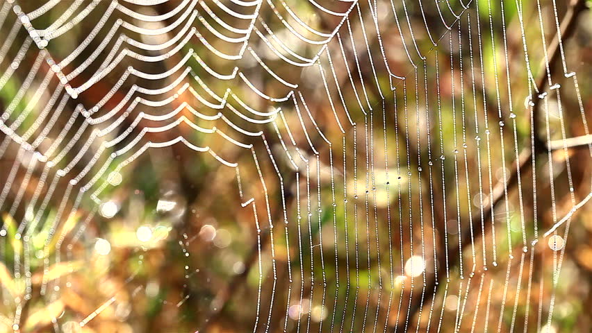 HD: A Spiders Web Wet From The Morning , 1920x1080