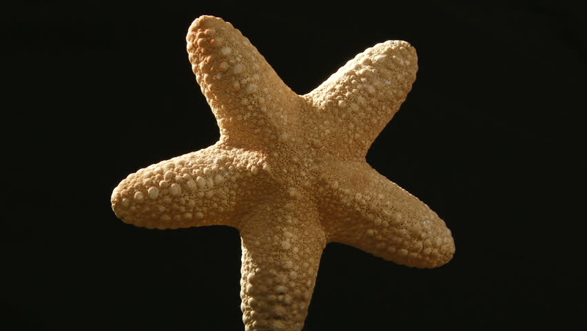 Petrified starfish, zoom in - HD stock footage clip