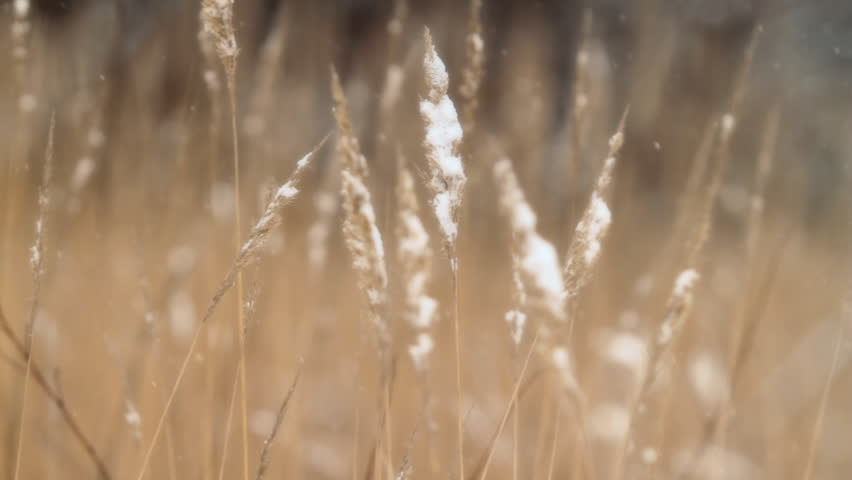 winter grass. nature background.   - HD stock video clip