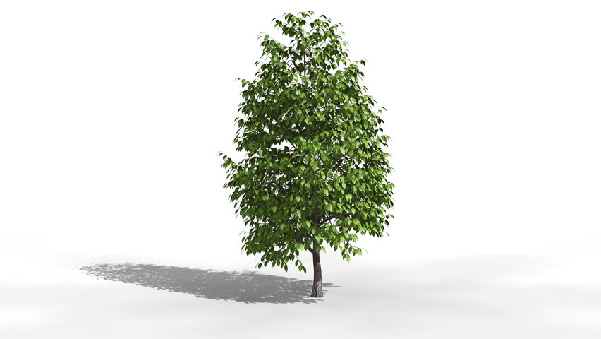 Tree grows from sapling. Comes with Alpha.