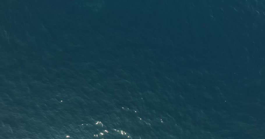 Aerial scene of wild dolphins in the sea.