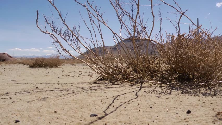 Dead Plants Decay On A Dry Desert Lake Bed. Stock Footage ...