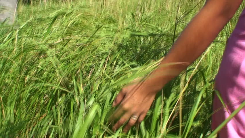 Filipino woman touching the green grass on a field during a windy summer day in the Philippines