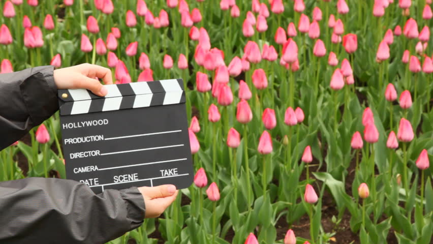Hands boy claps clapperboard on field with pink tulips and out from frame