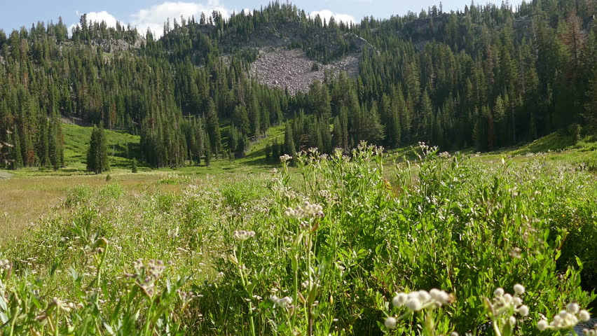 A green meadow surrounded by forest in Lassen Volcanic National Park, in Northern California, USA.  Video in 4k resolution.