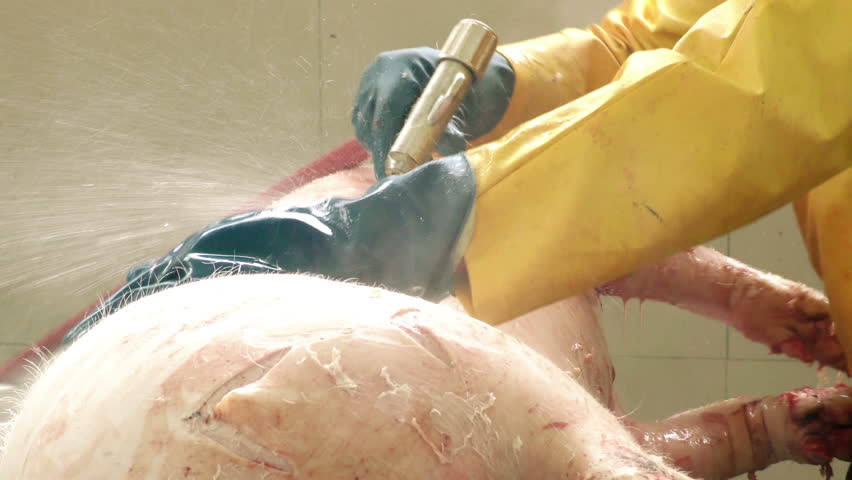 Cold and hot pressurized water is used for dehairing of hogs in slaughterhouse process