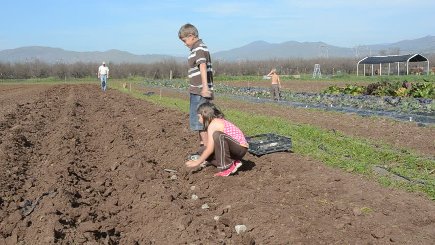 boy and girl work together to plant a row of potatoes on the farm - HD stock footage clip