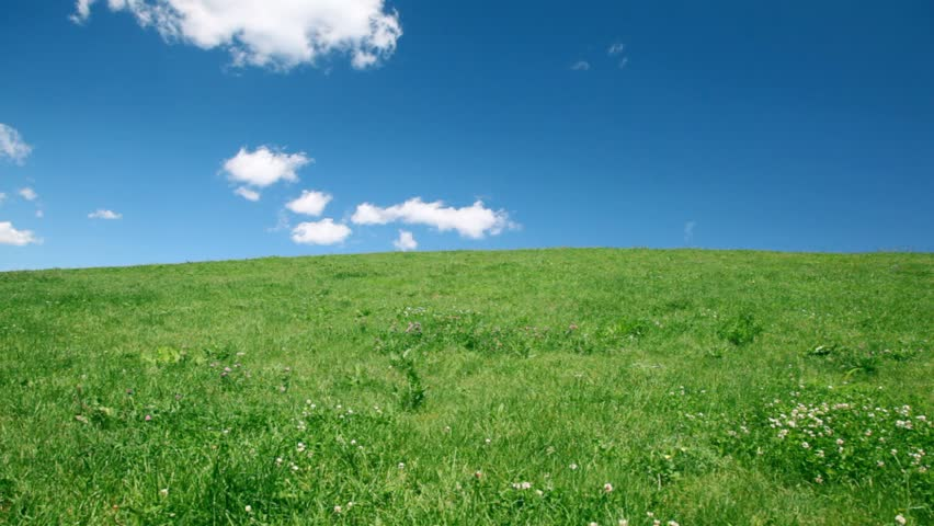 happy family holding hands up hill with green grass and wildflowers  - HD stock video clip