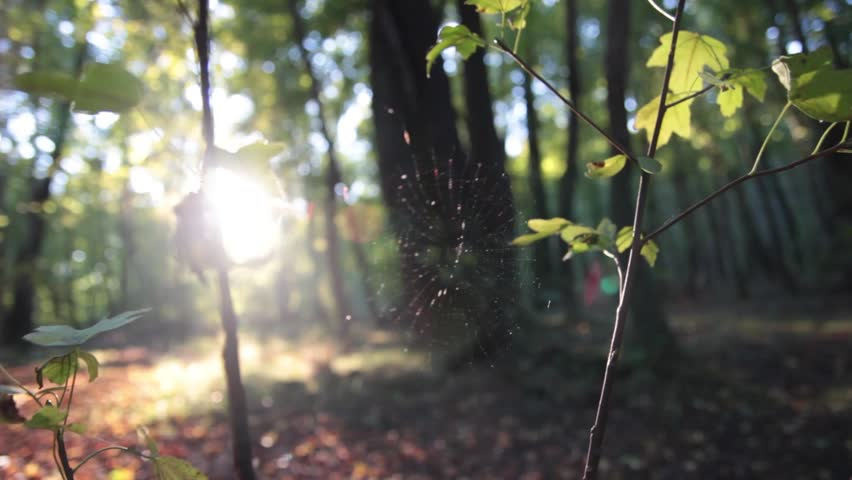 Nature Spider Web