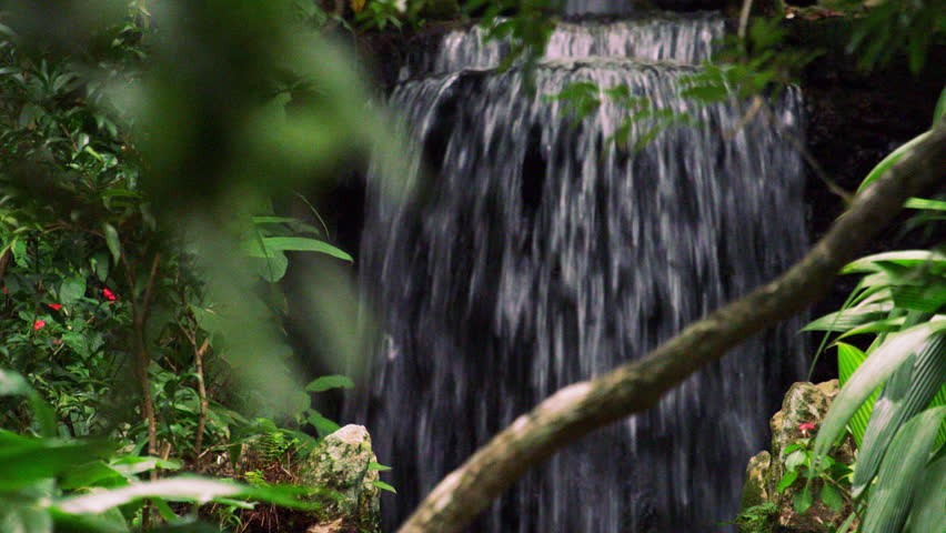 Rio de Janeiro, Brazil - June 2013: Botanical garden waterfall and plants, very close-up and panning slowly. Shot in Rio, Brazil.