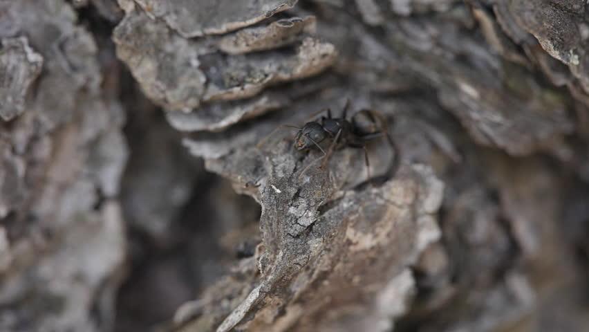 ants - HD stock video clip