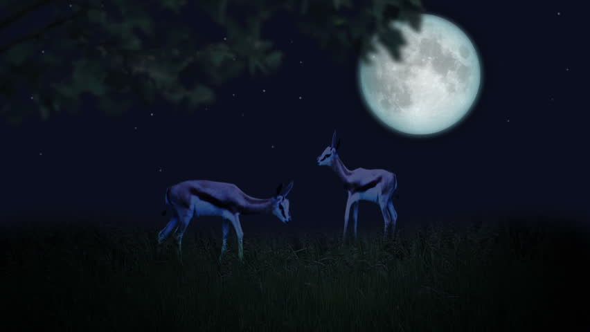Couple of deer in the moonlight | Shutterstock HD Video #1254928
