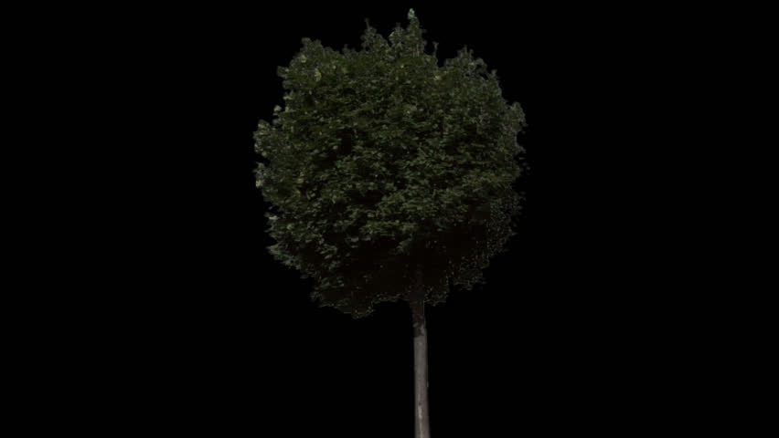 Isolate tree with alpha matte  - HD stock footage clip