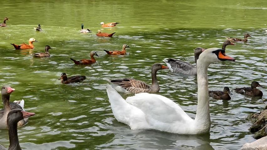 1920x1080 cabin lake ducks - photo #36