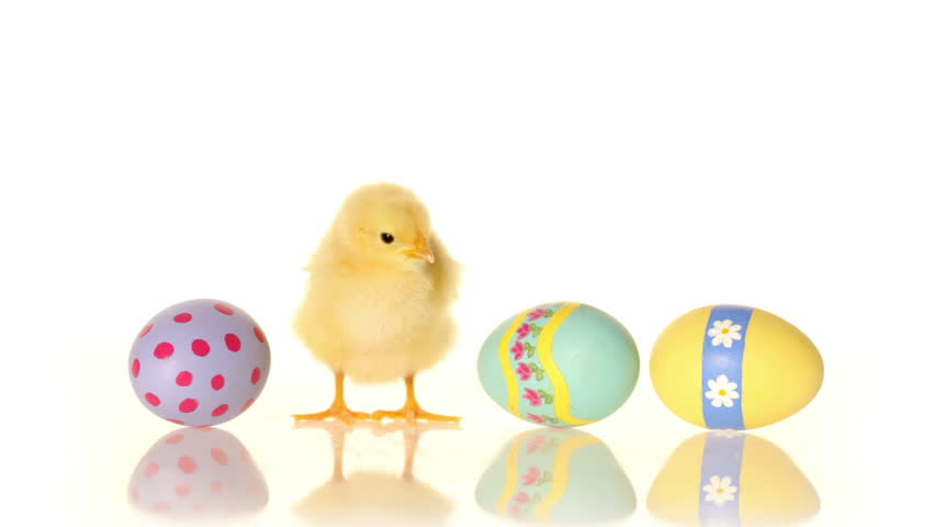 Cinemagraph - Easter eggs and baby chick. Looping Motion Photo.