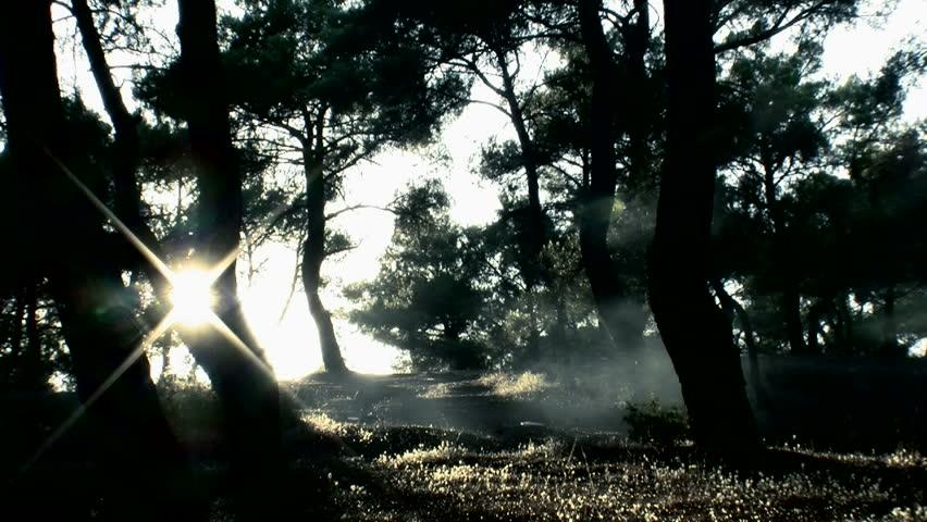 Fog and Sun Flare smoke