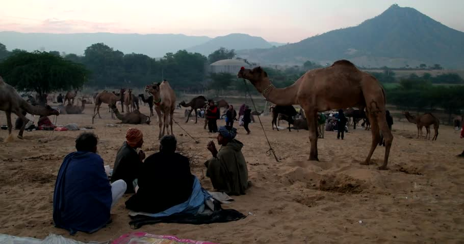 Pushkar, India-Circa November 2015:Camel and camel trader an early morning during Camel Fair in Pushkar 2015. Farmers and traders from all over Rajasthan flock for the annual fair. - 4K stock footage clip