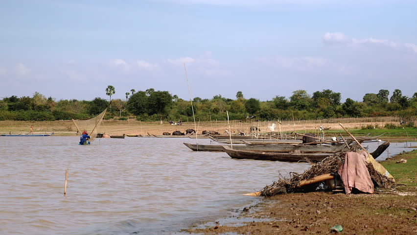 Shrimp fisherman catching shrimp with a large net in a lake while a herd of buffaloes go out the water on the background