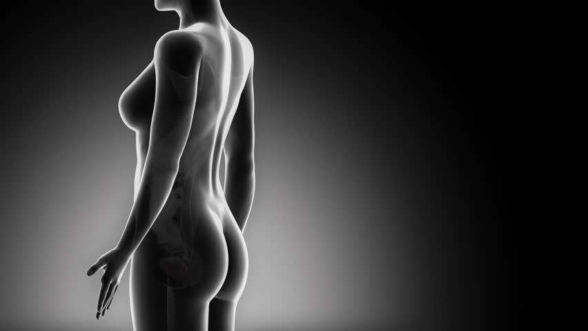 Female BLADDER anatomy in black detail x-ray loop - HD stock video clip