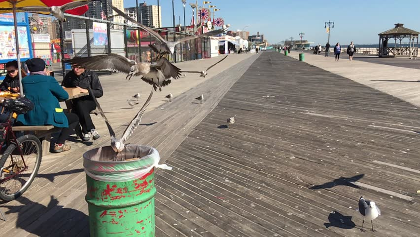 New York City - United States, October 2015: New York Coney Island Seagulls Slow Motion - HD stock video clip