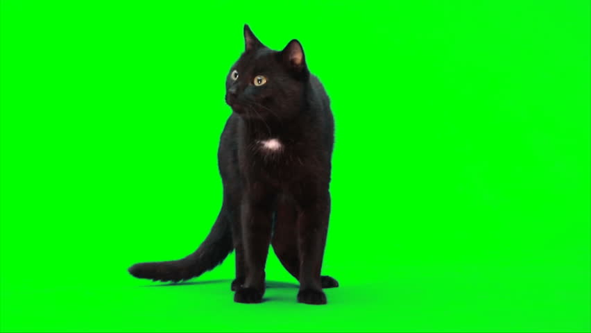 Black male cat stands and watches | Shutterstock HD Video #1405084