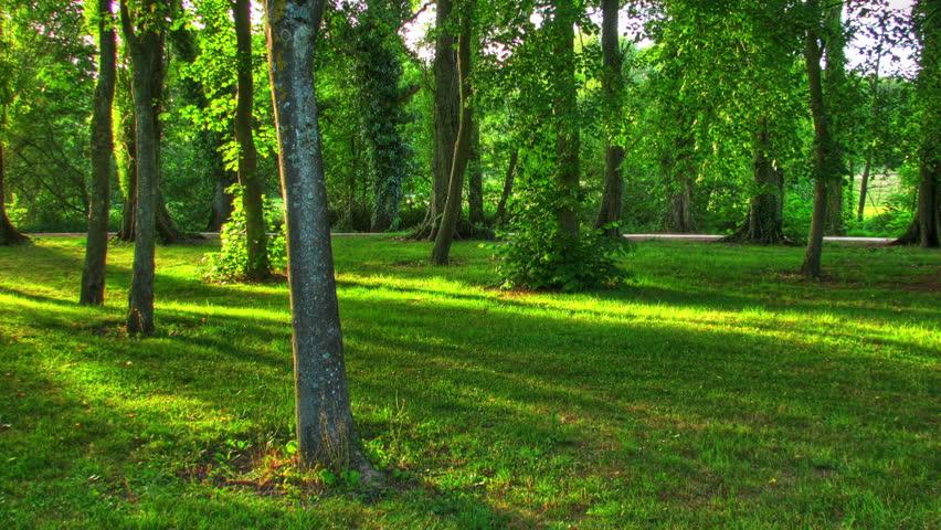 Sunset beams through trees, HD motorized time lapse clip, high dynamic range imaging.