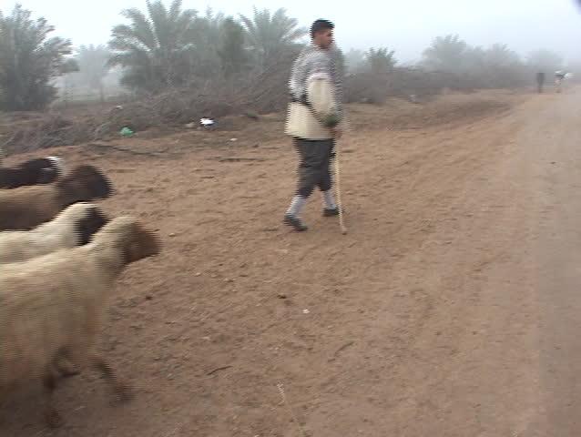 IRAQ - CIRCA 2003: An Iraqi sheepherder walks along a dirt road circa 2003 in Iraq.