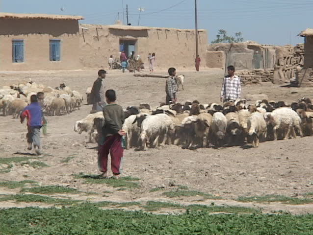 IRAQ - CIRCA 2003: Young Iraqi men and boys herd sheep on a farm circa 2003 in rural Iraq.