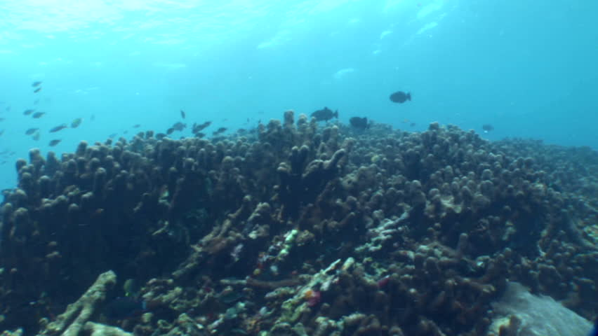 Header of Acropora palifera