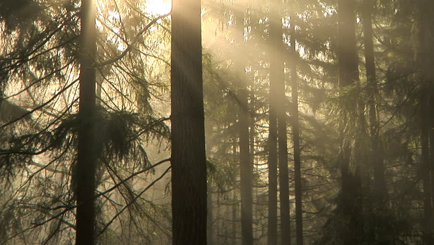 Early morning light and fog drifting through the trees, time lapse - HD stock footage clip