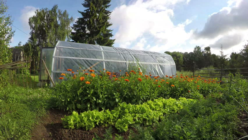 Polyethylene greenhouse in vegetable garden with wooden fence on sunny summer's day in countryside, time lapse 4K - 4K stock video clip