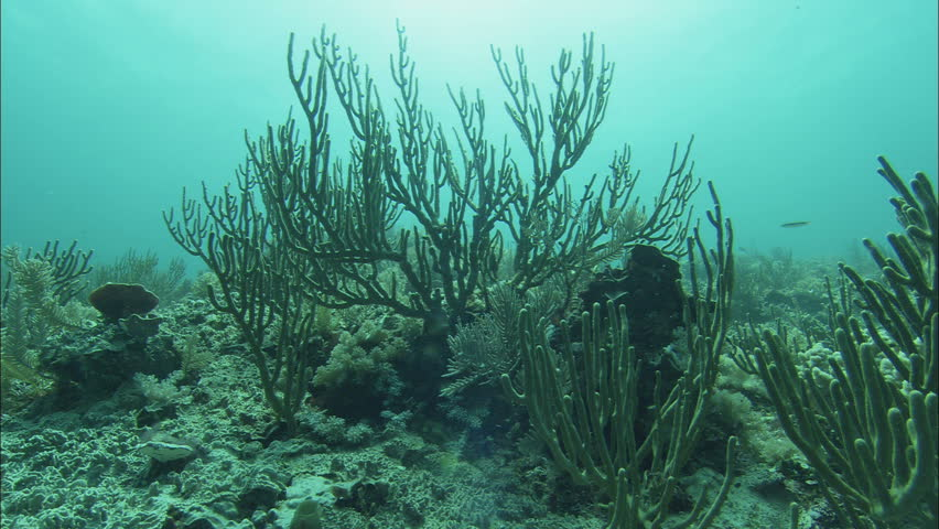 Underwater Seabed Colorful Marine Life Caribbean Stock ... |Ocean Life Plant Caribbean