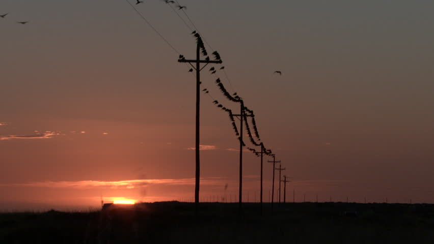 WS Birds perching on power line at sunset - HD stock video clip