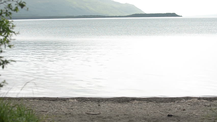 A young Alaskan brown bear walking along the shore of a lake in Katmai National Park, Alaska - HD stock video clip
