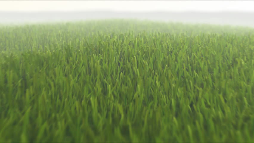 camera flight over fresh spring grass, seamless loop, 3D animation, depth of field, motion blur, HD 1080p TIP: You can speed up 2x or 3x this sequence to achive more impressive effect. - HD stock video clip