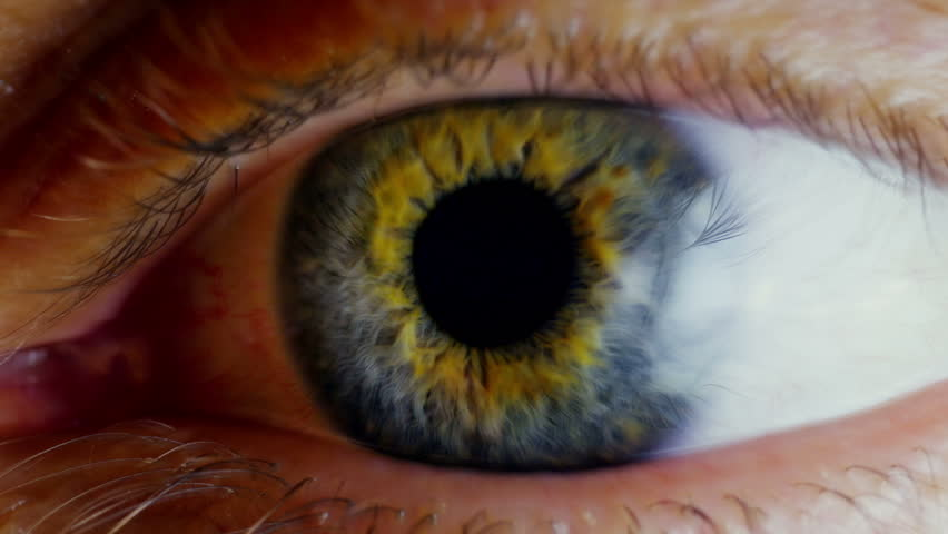 Human eye iris contracting. Extreme close up.