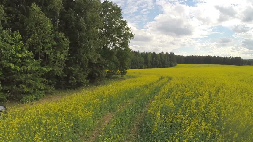car and yellow field - HD stock footage clip