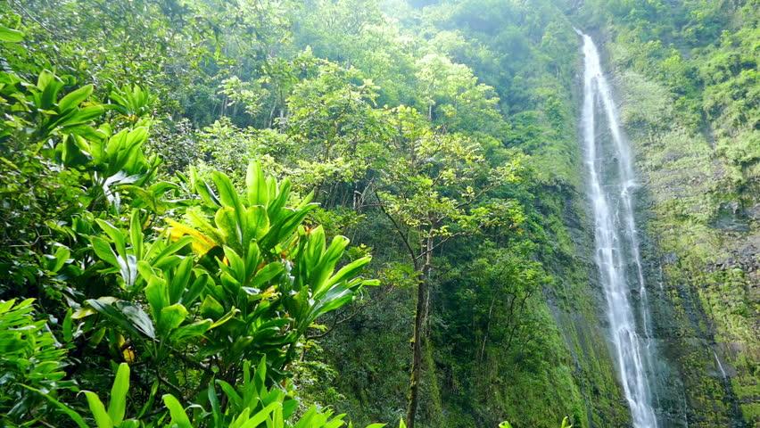 Rainforest On The Big Island: Waterfall In Rainforest, Three Small Waterfalls, Tilt Down