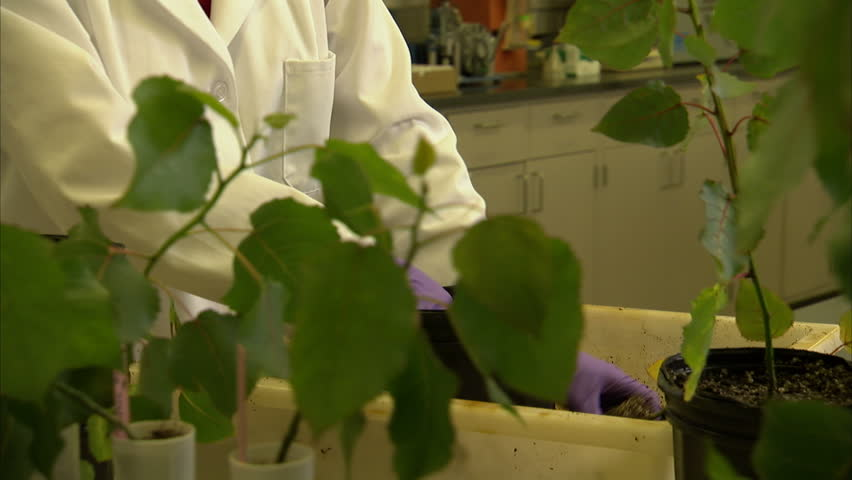 2008:A scientist places a tree sapling into a pot.
