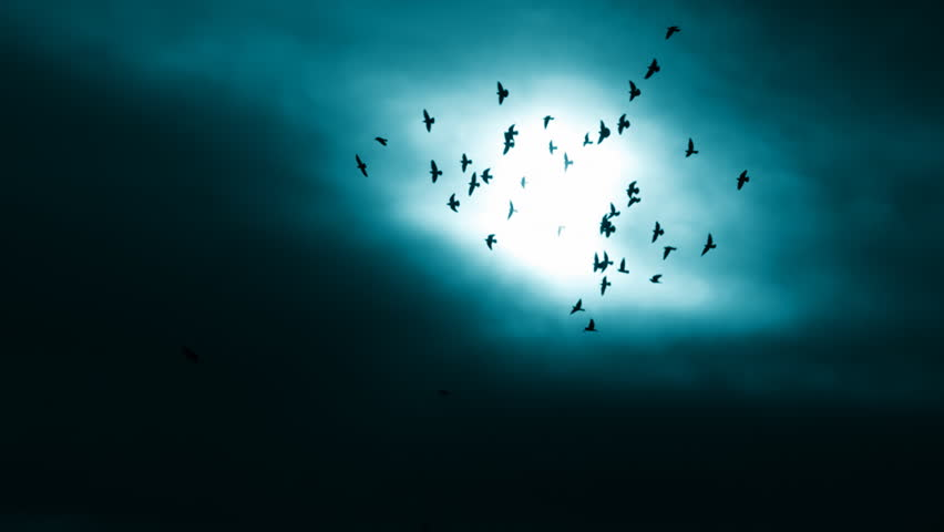 This is a beautiful natural video of Flying Flock Of Birds (Doves) In Cinematic Magic dark Sunset Sky...You can use this video in your original projects or as websites background - HD stock footage clip