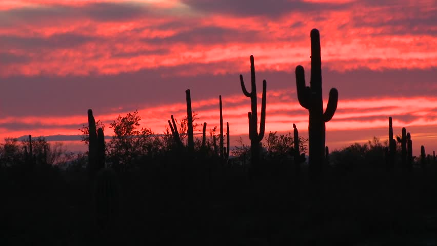 The sun is setting over a field of cactus. - HD stock video clip