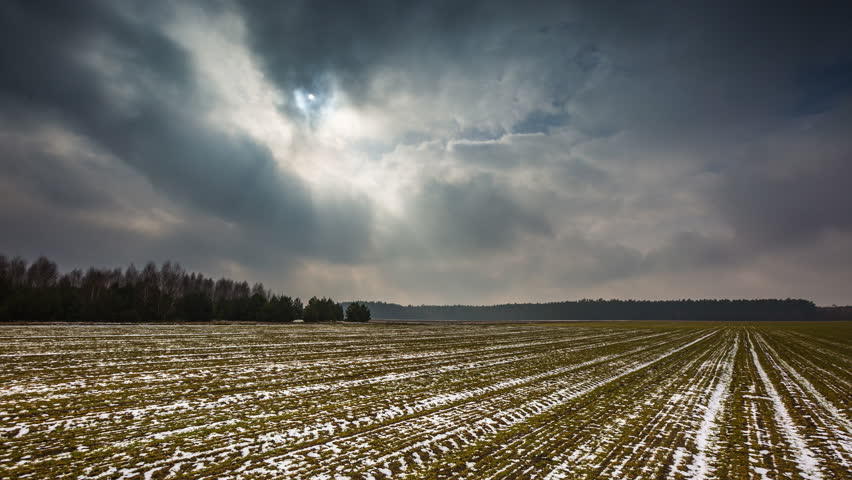 4k timelapse of young cereal field under cloudy sky at early springtime. 4096x2304, 25fps  #14963521