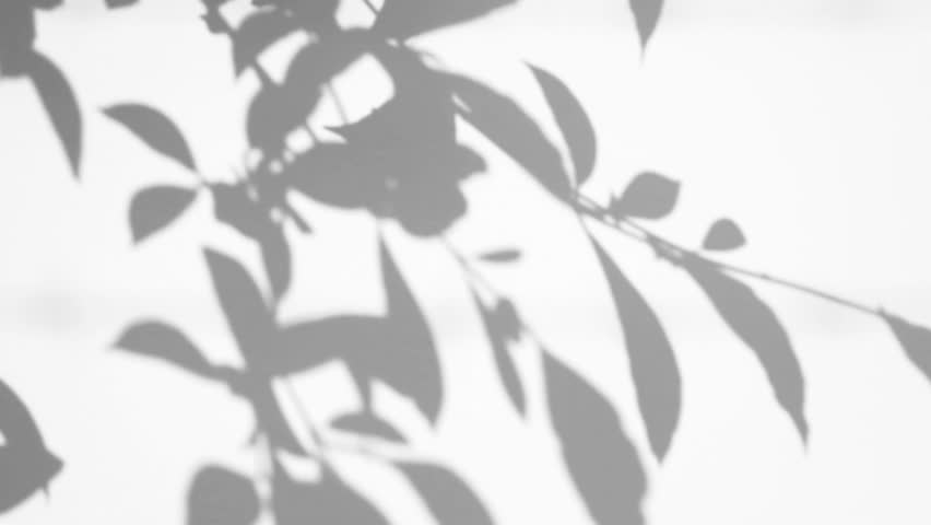 Silhouette Shadow Of Leaves Motion By Natural Wind On