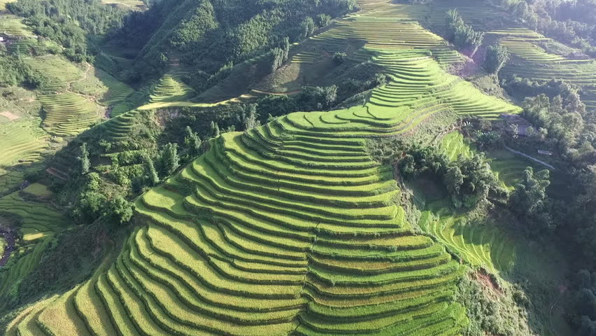 Aerial video in an amazing landscape, with drone, above rice terraces in a beautiful day.