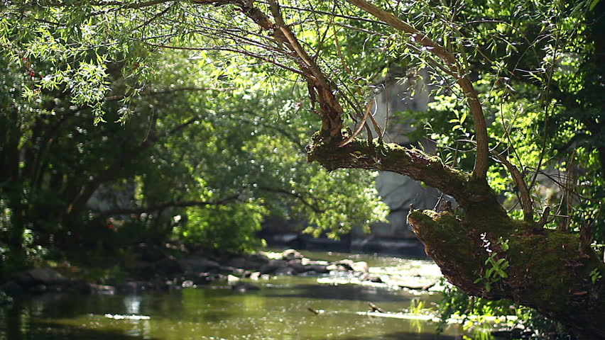 old willow above the river, sunbeams on a moss-covered tree, willow covered moss over a mountain stream, reflections on an old tree over the water - HD stock footage clip