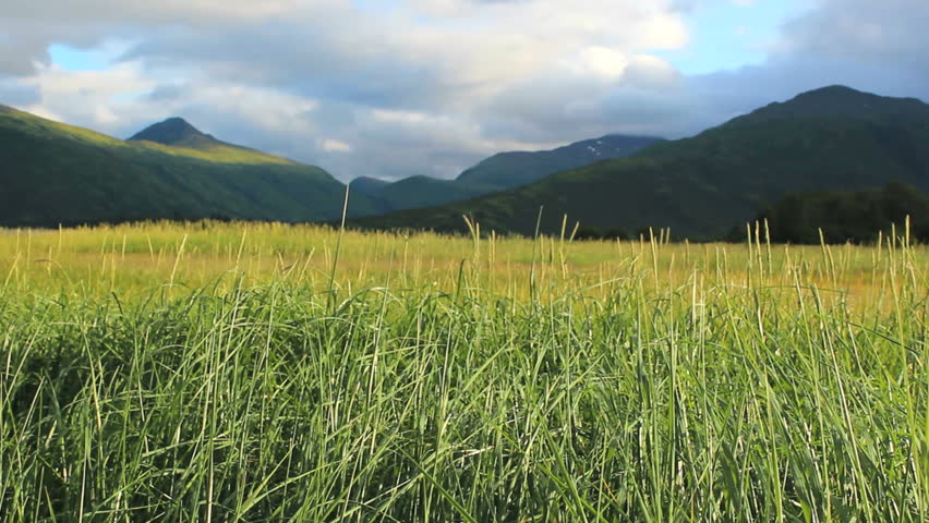 Tall field of green grass blows in wind flanked by scenic mountains, clouds, blue sky on Kodiak Island, Alaska. 1080p - HD stock video clip