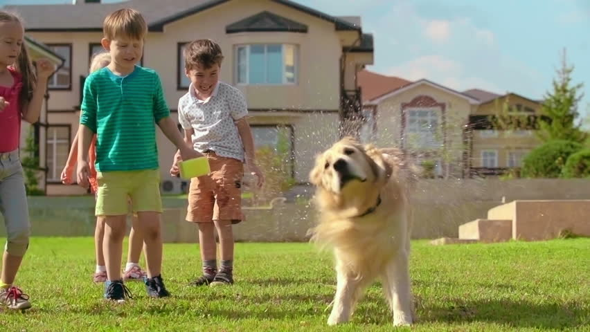Four kids laughing at cute golden retriever shaking off water on green lawn in slow motion - HD stock footage clip