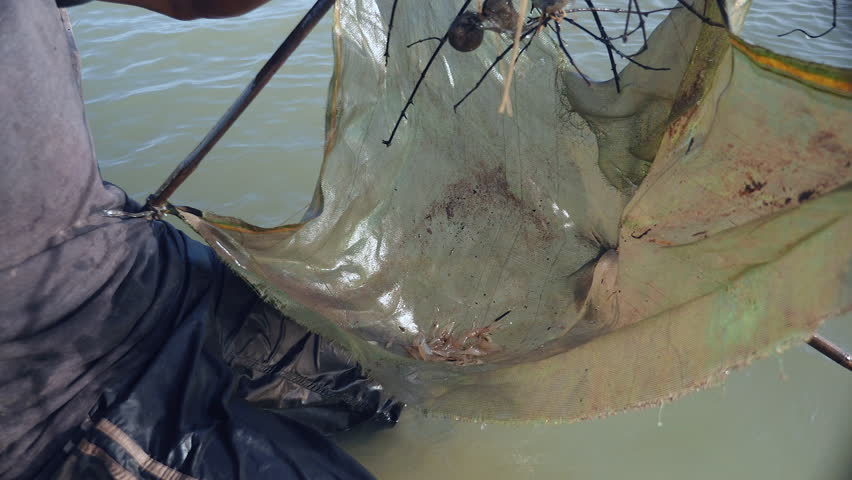 Close-up on prawn fisherman baiting net, dropping and pushing it deeper into river with paddle for a catch