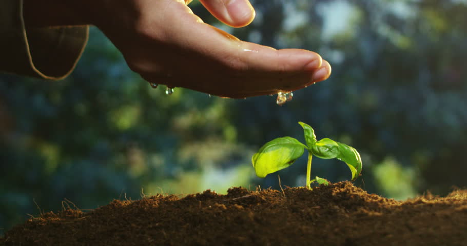 if you plant a seed pdf